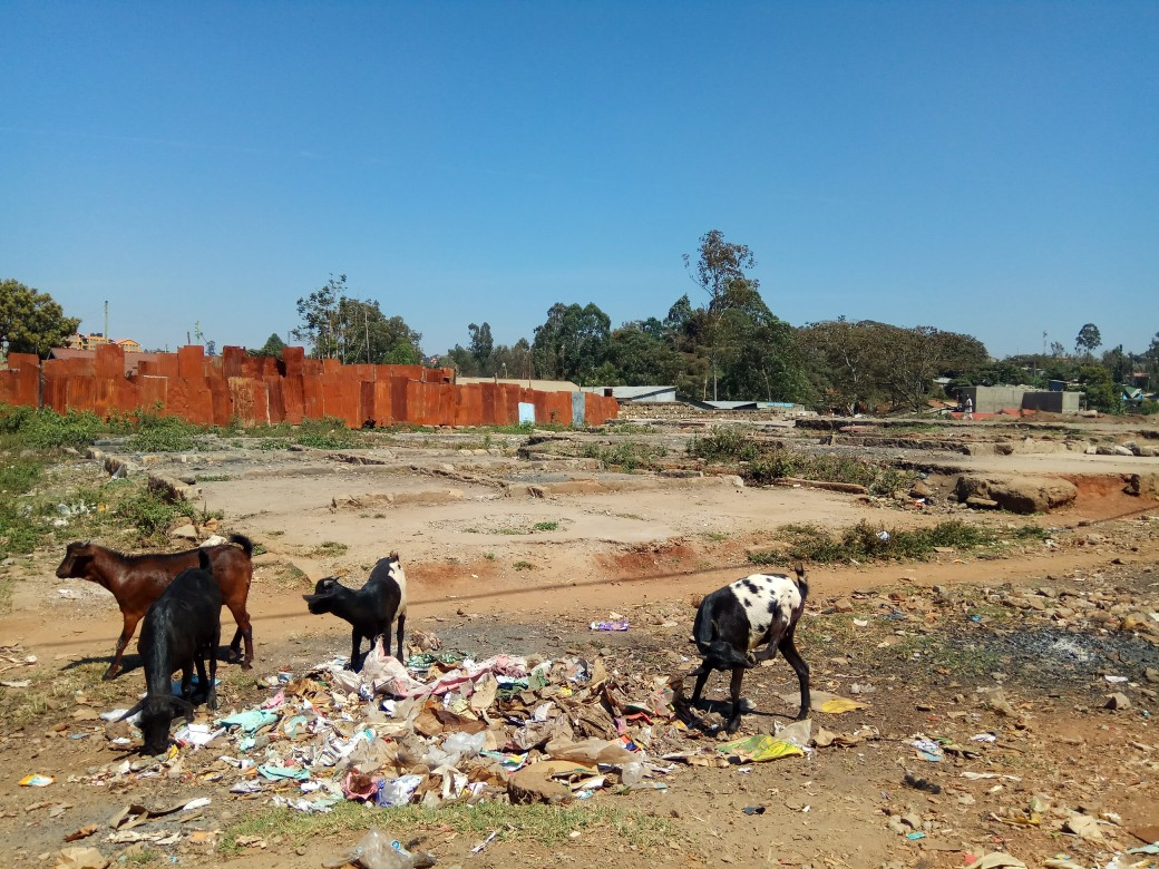 Goats grazing on the rubbish piled up near the site of a fire at the edge of a slum