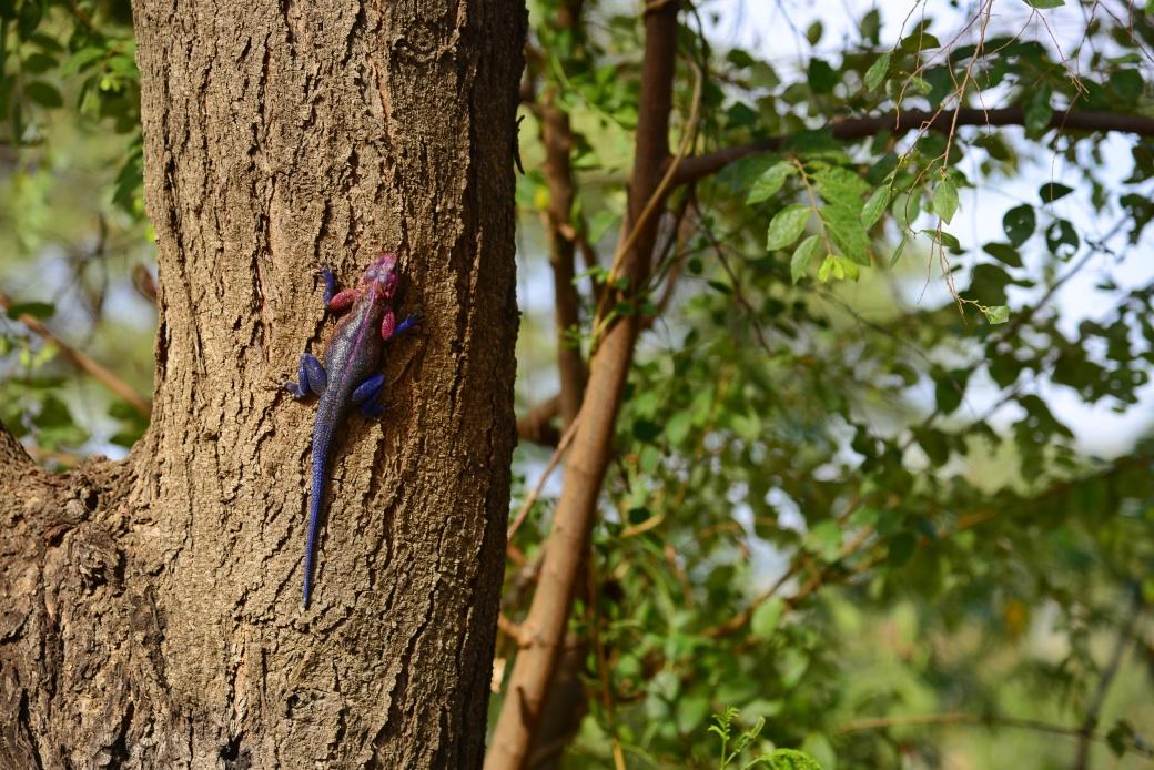 Purple lizard climbing a tree in the garden